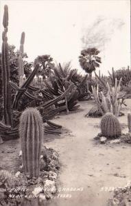 Pirtle Cactus Gardens Near Edinburg Texas Real Photo 1919