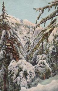 California Mount Lowe In Winter