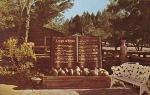 California Petrified Forest