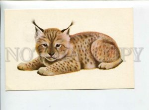 3165933 HUNT Little LYNX by ISAKOV Old Russian Color Card