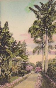 In A Royal Palm Garden Florida Albertype