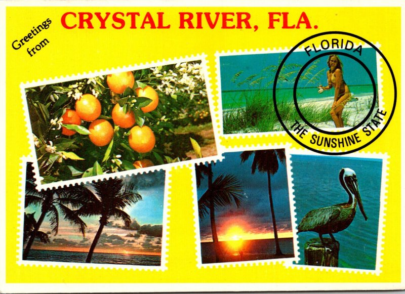 Greetings From Crystal River Florida With Multi Views