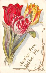 Sheldon Wisconsin~Red White Yellow Tulips~Art Nouveau Greetings~Embossed~1913