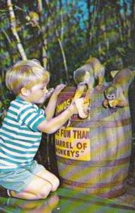 Young Boy Feeding Monkeys At Homosassa Springs Florida