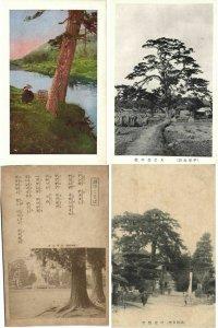 JAPAN JAPON ASIE ASIA TREES 150 CPA Pre-1950 (L2402)