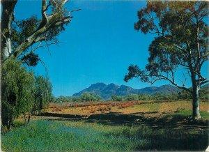 Postcard Australia Moralana Drive Flinders Rangers Australian Gum Trees