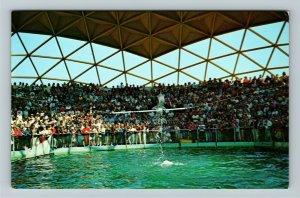 St Petersburg FL- Florida, Aquatarium Porpoise Under Golden Dome Chrome Postcard