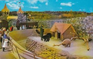 Canada Bear Cubs Storyland Zoo Edmonton Alberta