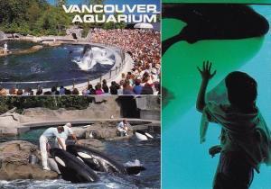 Canada Vancouver Aquarium Killer Whales Vancouver British Columbia