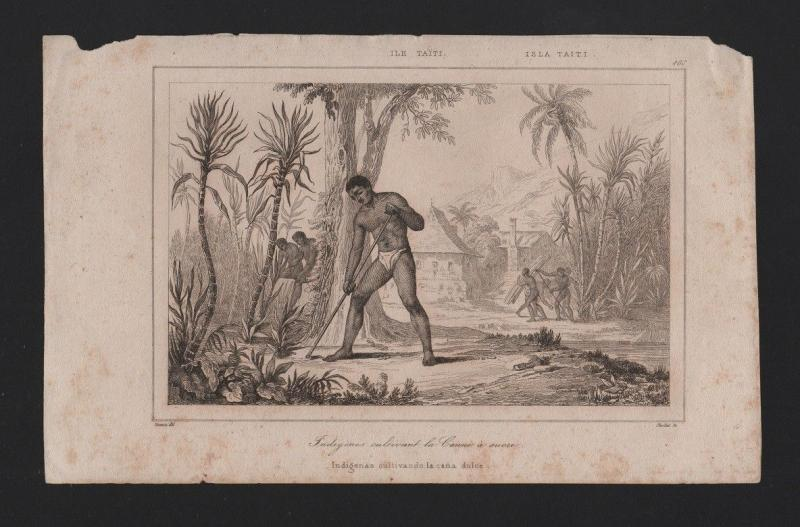 rare ANTIQUE PRINT 19Century Year 1830 TAHITI ISLANDS NATIVES agriculture sugar