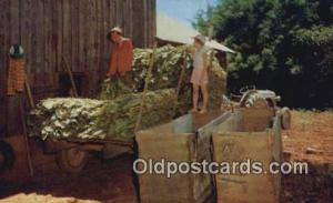 Filling Tobacco Barn Farming Postcard Post Card  Filling Tobacco Barn