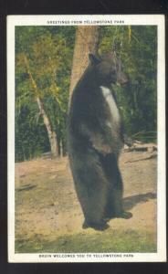 YELLOWSTONE NATIONAL PARK WYOMING LARGE BRUIN BEAR VINTAGE POSTCARD BEARS