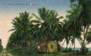 costa rica, Coconuts Groves along the Northern Ry (1926)