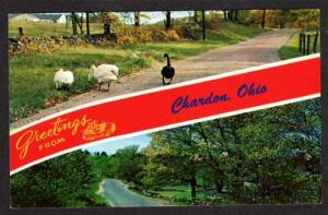 OH Greetings From Chardon Ohio Banner Postcard Birds Scenic view