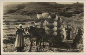 Ethnography - Native Swiss Woman Cow Pulling Wagon Hay or Hay RPPC