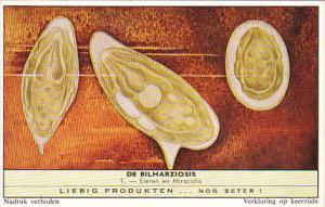 Liebig Trade Card s1751 Bilharziosis Parasite Disease No 1 Eieren en Miracidia