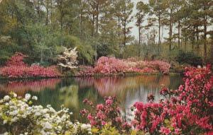 Alabama Mobile Bellingrath Gardens Mirror Lake 1957