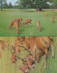 Nara Deer Wildlife 2x Japan Japanese Postcard