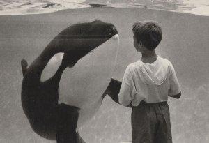 Dolphin Almost Hugging Child Rare Holland Photo Award Postcard