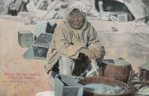 NOME , ALASKA , 00-10s ; Woman cleaning Tom Cod