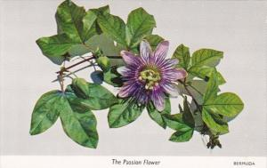 Bermuda The Passion Flower