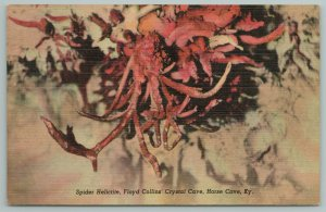 Horse Cave Kentucky~Spider Helictite~Floyd Collin Crystal Cave~Vintage Postcard