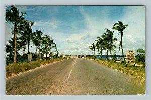 Punta Gorda FL-Florida, Road View, Chrome c1962 Postcard