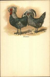 Agriculture Chickens Poultry HOUDANS c1890s Lithograph Postcard