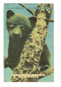 A bear cub in tree in the Great Smoky Mountains National Park, Tennessee, PU-...