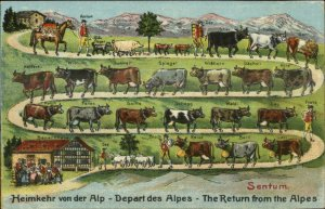 Cattle Cow Breeds Walking Path Switzerland SENTUM Embossed c1910 Postcard