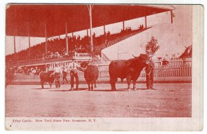 Syracuse, N.Y., Prize Cattle, New York State Fair