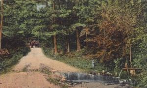 On the way to The Watson, Twin Lakes, Pike County, Pennsylvania, 00-10s