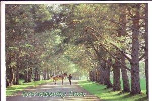 Noraway Inn & Cabins, Margaree Valley, Cape Breton, Nova Scotia, Riding Horse