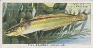 Wills Vintage Cigarette Card The Sea-Shore No 2 Five-Bearded Rockling  1938