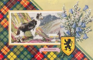 Scotch Sheep Dog & BUCHANAN Tarton , Scotland , 1920-30s