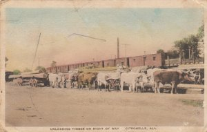 CITRONELLE, Alabama, PU-1930; Unloading timber on Right of Way, Cattle