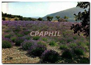 Modern Postcard Route De La Lavande A flowery field in Provence