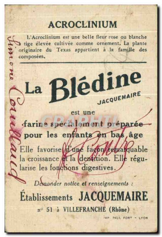 Image Acroclinium Bledine