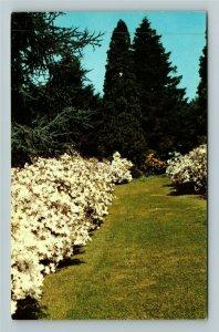 Winterthur DE- Delaware, Winterthur Garden, Henry Du Pont, Chrome Postcard