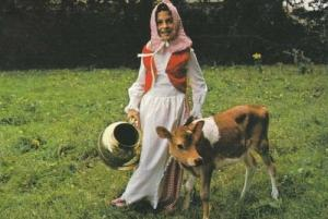 Jersey Island Cow Calf + Girl Costume Fashion Postcard