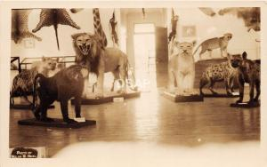 B9/ Warren New Hampshire NH RPPC Postcard c20s Morse Museum Taxidermy Interior 2