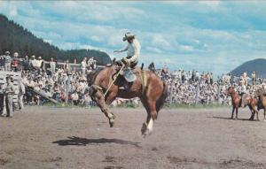 Bucking Bronc at Williams Lake Rodeo,  Williams Lake,   B.C.,  Canada,  40-60s