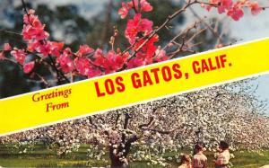 Los Gatos California Greetings Flowers Vintage Postcard JA4741512