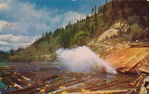 Log Pond 1955