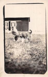 A74/ Tipton Michigan Mi Real Photo RPPC Postcard c1915 Evans Lake Barn Dog 2