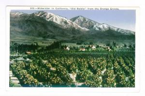 Midwinter in California, Old Baldy, from the Orange Groves, unused Postcard