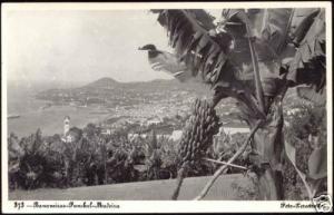 portugal MADEIRA Funchal, Bananeiras, Panorama 50s RPPC