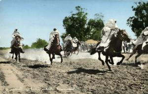 libya, Native Arab Cavalry, Horses (1960s)