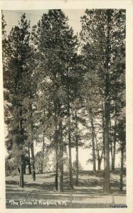 1920s Pines of Ruidoso New Mexico RPPC real photo postcard 11432
