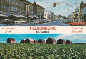 TILLSONBURG, Ontario, Canada, PU-1975; Tobacco Fields, Tobacco Capital Of Canada